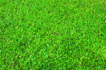 Green grass background Stock Photo - 10753802