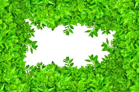 Frame from green leafs isolated on white background with space for text. photo
