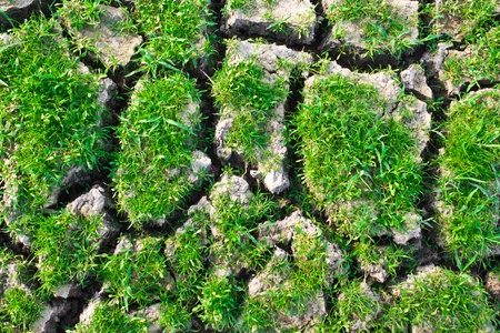 Texture of green grass on cracked earth photo