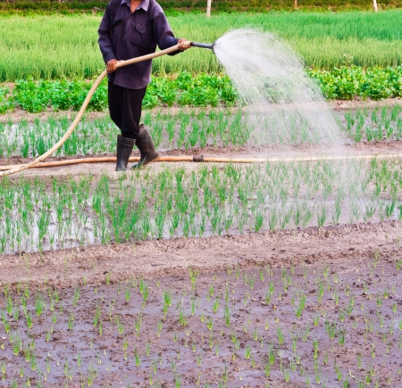Asian man watering with the shower in the vegetables garden Stock Photo