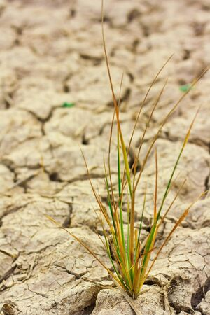 Survive small plant in dry brown soil Stock Photo - 15490316