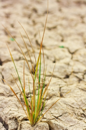 Survive small plant in dry brown soil Stock Photo - 15490291