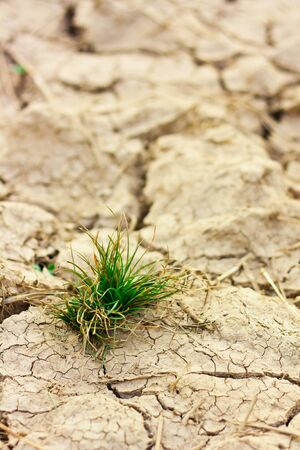 Survive small plant in dry brown soil Stock Photo - 15490319