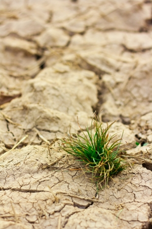 Survive small plant in dry brown soil