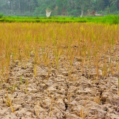 Young plants struggling to grow in barren fields Stock Photo - 15490321