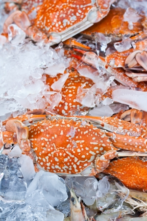 Crabs in an ice tray in fish matket Stock Photo