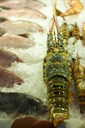 fish store: mostrador con pescados y mariscos en almac�n de los pescados