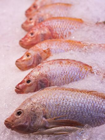 unprocessed: A lot of red snapper fishes on ice Stock Photo
