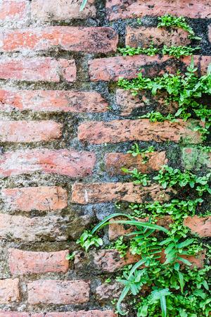Fern living on cracked concrete bricks wall