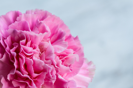 Closed pink artificial flower on white background Stock Photo