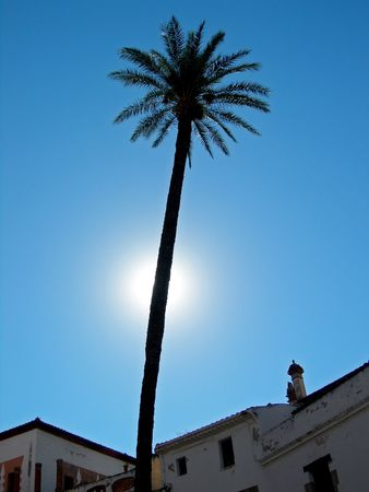 glows: sun glows behind tall palm tree reaching over rooftops