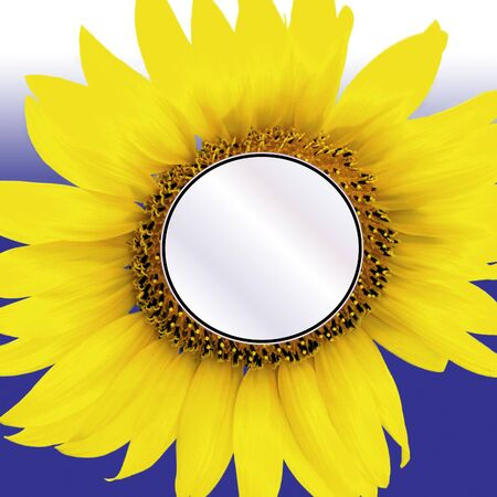 sunflower center ready for photo or message insert on blue background Stock Photo - 1728573