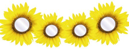 centers: four sunflower centers ready for photo or message insert on white background