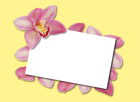 blank white card bordered by pink orchid petals on yellow background photo