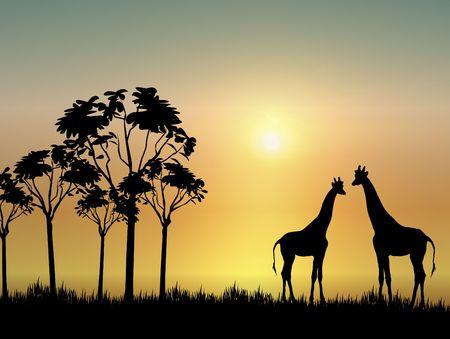 giraffe silhouette: silhouette of two giraffes on grassy plain at sunrise