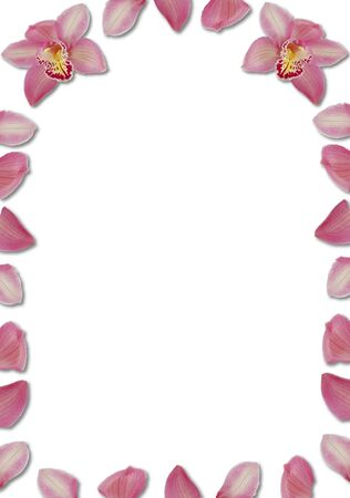pink arching orchid petal border on white