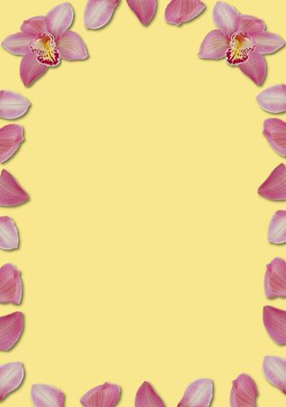 arching: pink arching orchid petal border on yellow
