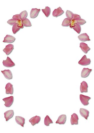 arching: pink arching orchid petal border on white