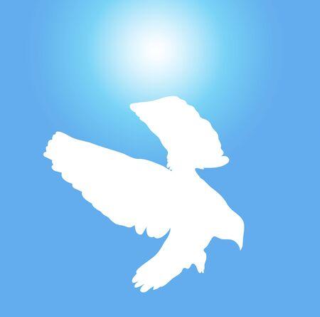 clarity: illustration of white dove flying on sunny blue sky
