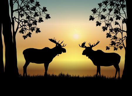 north woods: illustration of two moose in forest at sunrise
