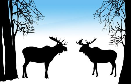 illustration of moose of two moose in winter forest