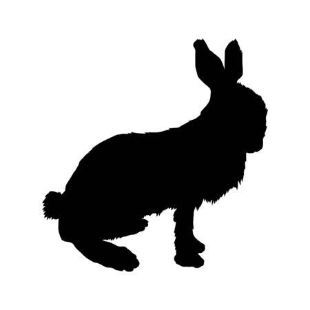 silueta de conejo conejo blanco Foto de archivo - 4588297