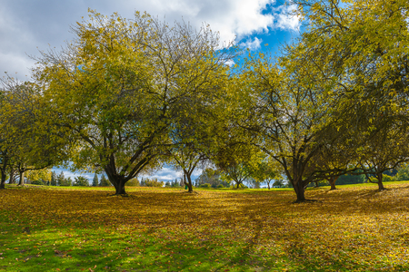 Early Winter landscape and decidous trees in the park in California