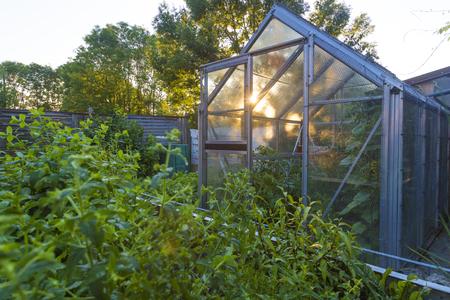 Gewächshaus mit Kräuterbeet Standard-Bild - 127696884