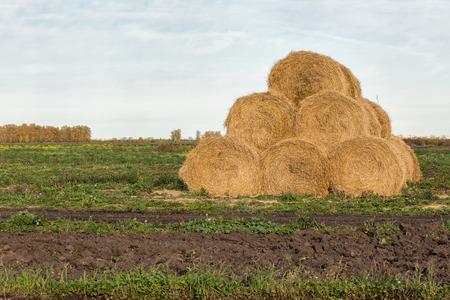 hayroll: Rolls of haystack