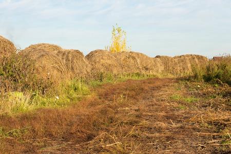 hayroll: Stacks of hay on autumn landscape