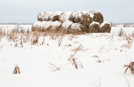 hayroll: Rolls of haystack in winter snow Stock Photo