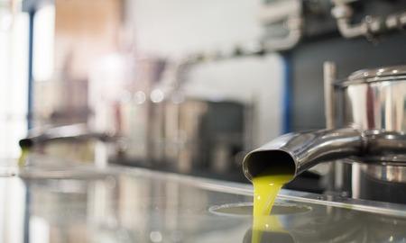 L'huile est coulée du tube dans une usine à froid presse après la récolte des olives dans l'un des villages crétois, Grèce