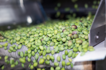 rinsing: The process of olive washing in a modern oil mill Stock Photo
