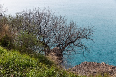 A green grass and graphic leaves free tree against a blue sea background