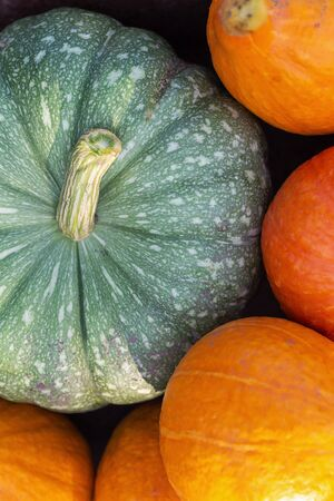 A flat lay photo of colorful pumpkins collected at harvest Standard-Bild - 131659516