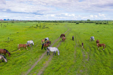 A herd of horses graze in a green meadow along the river Archivio Fotografico