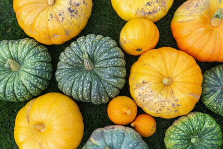 A flat lay photo of colorful pumpkins collected after harvest