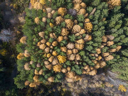 Aerial photo of colorful forest in autumn season. Yellow and green trees