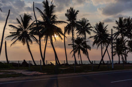 Palm tree silhouettes against cloudy sky at sunset