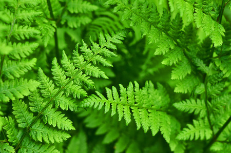 great green bush of fern in the forest Stok Fotoğraf