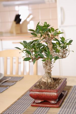 Kitchen interior detail with asian decorations and bonsai on the table photo