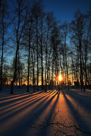 Sun rays through leafless trees in winter photo