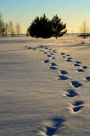 Human foot prints against sunset in snow photo