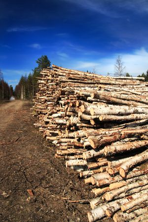 Cut birch logs at the edge of the forest Stock Photo - 3013685