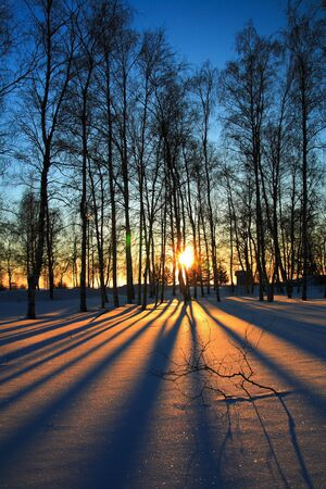 the setting sun: Sun rays through leafless trees in winter