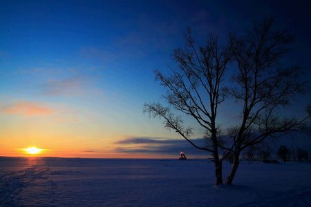 Sunset on frozen sea shore with tree silhouette Stock Photo