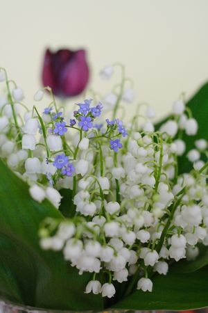 Bunch of lily of the valley closeup with forget-me-not flowers Stock Photo - 3370481
