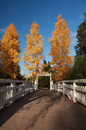 Yellow trees in autumn near a bridge, Finland Stock Photo - 3690157