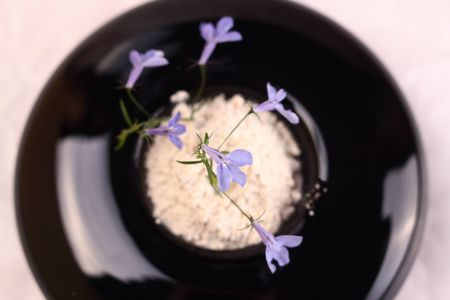 Small blue flower in a black round vase photo