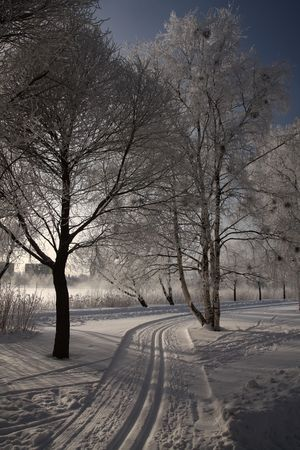 very cold: Very cold day, view over snowy park in Finland